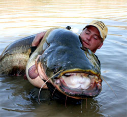 The Best Guided River Ebro Fishing Holidays for Wels Catfish